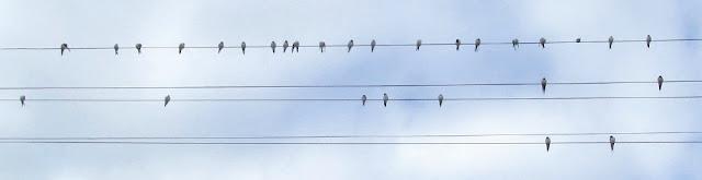 ласточки на проводах