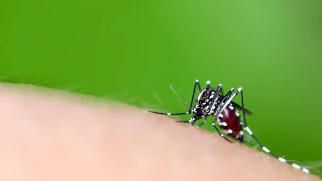 gelang-anti-nyamuk
