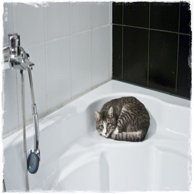 cara kucing mandi - shampoo khusus - memandikan kucing