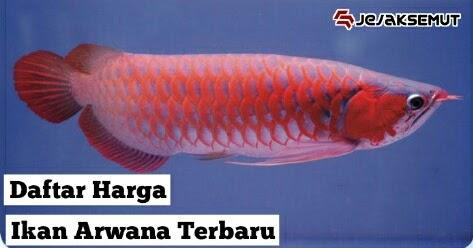 Harga Ikan Arwana Anakan Dan Dewasa Semua Jenis Terbaru 2020 Jejaksemut