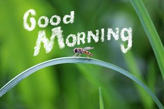 Beautiful Image of Good Morning