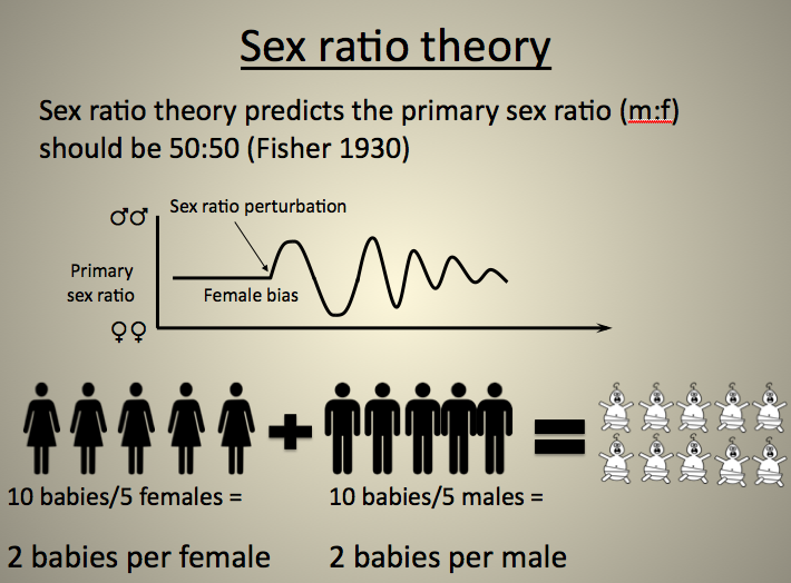 Primary Sex Ratio 17