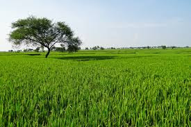 Agriculture Rich India
