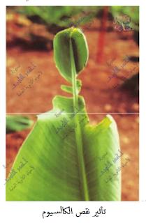 مسببات المرض والموت عند النبات - الظروف غير الملائمة - نقص المواد الغذائية
