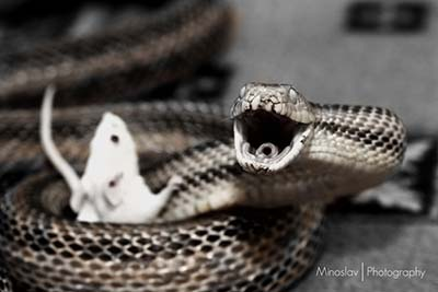 When the snake becomes freely without snake cages Funny - photo#4