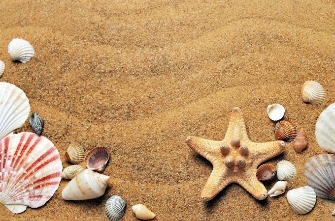 Inilah Alasan Kenapa Anda Harus Libur Ke Pantai