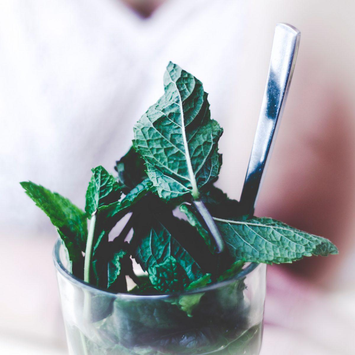prevencija-liječenje-zdravlje-ljekovito_bilje