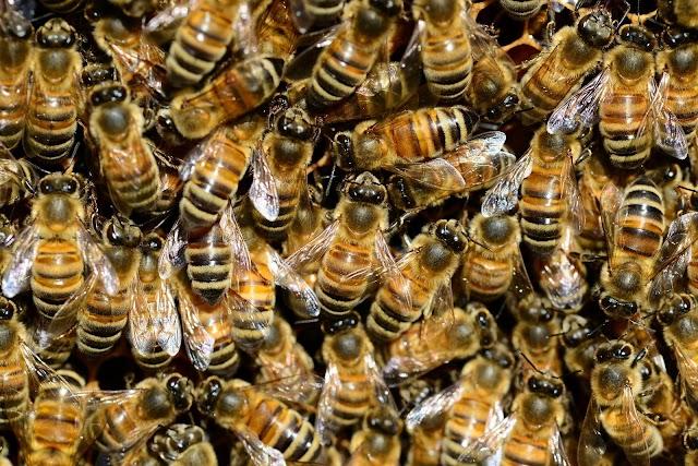 Családi ház födémjébe költözött egy méhcsalád Kabán