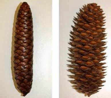 Valesa va bien hallali sur les frisottis vive les boucles - Que faire avec des pommes de pin ...
