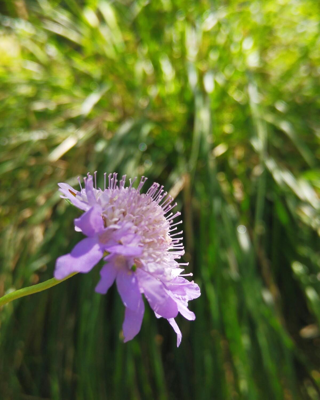 Agapanthus Foglie Gialle come scegliere i semi di annuali - by serena