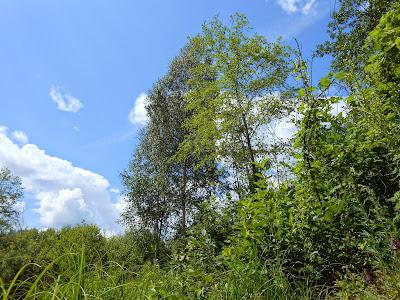 Небо над деревьями