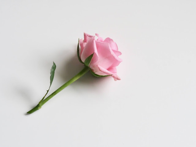 Rose Wallpapers in 4K - Pics Directory