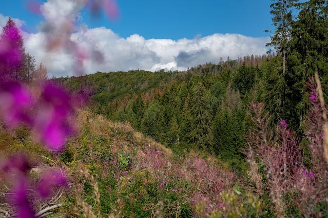 Drei-Täler-Tour und Stadtrundgang Bad Harzburg  Wandern im Harz  Eckerstausee - Radauwasserfall 21