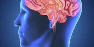 human-brain-lead-exposure