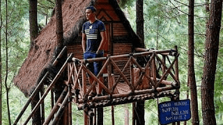 Hutan Pinus Kita Gemaharjo Pacitan