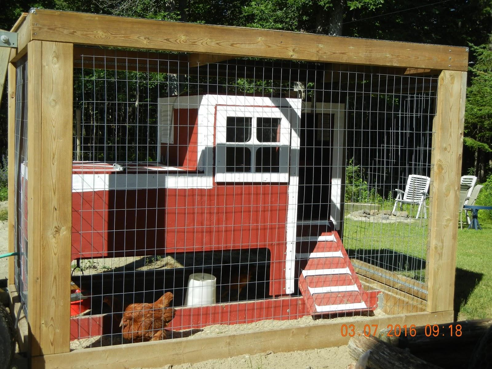 Raise Hens for Eggs