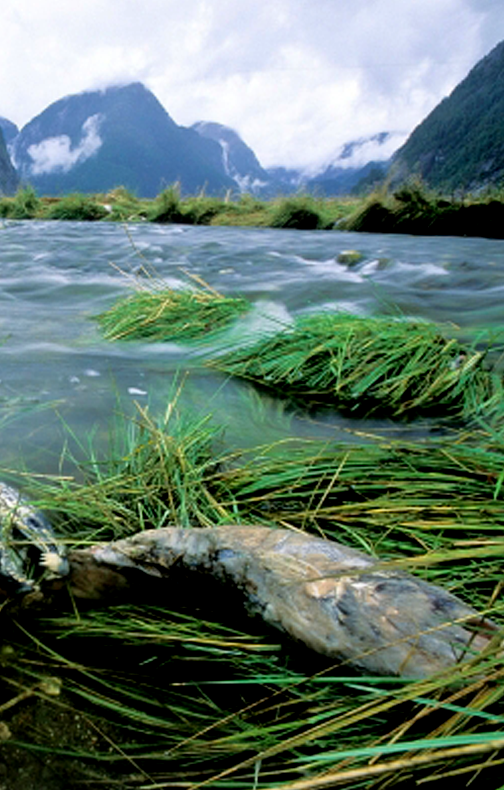 The Great Bear Rainforest, Canada