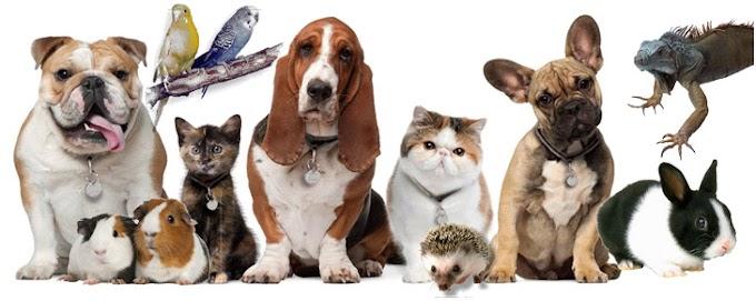 Top 10 pets