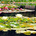 DIVERSITY IN PLANT CHARACTERS IN RELATION TO WATER AVAILABILITY || by - Lukapriya Dutta
