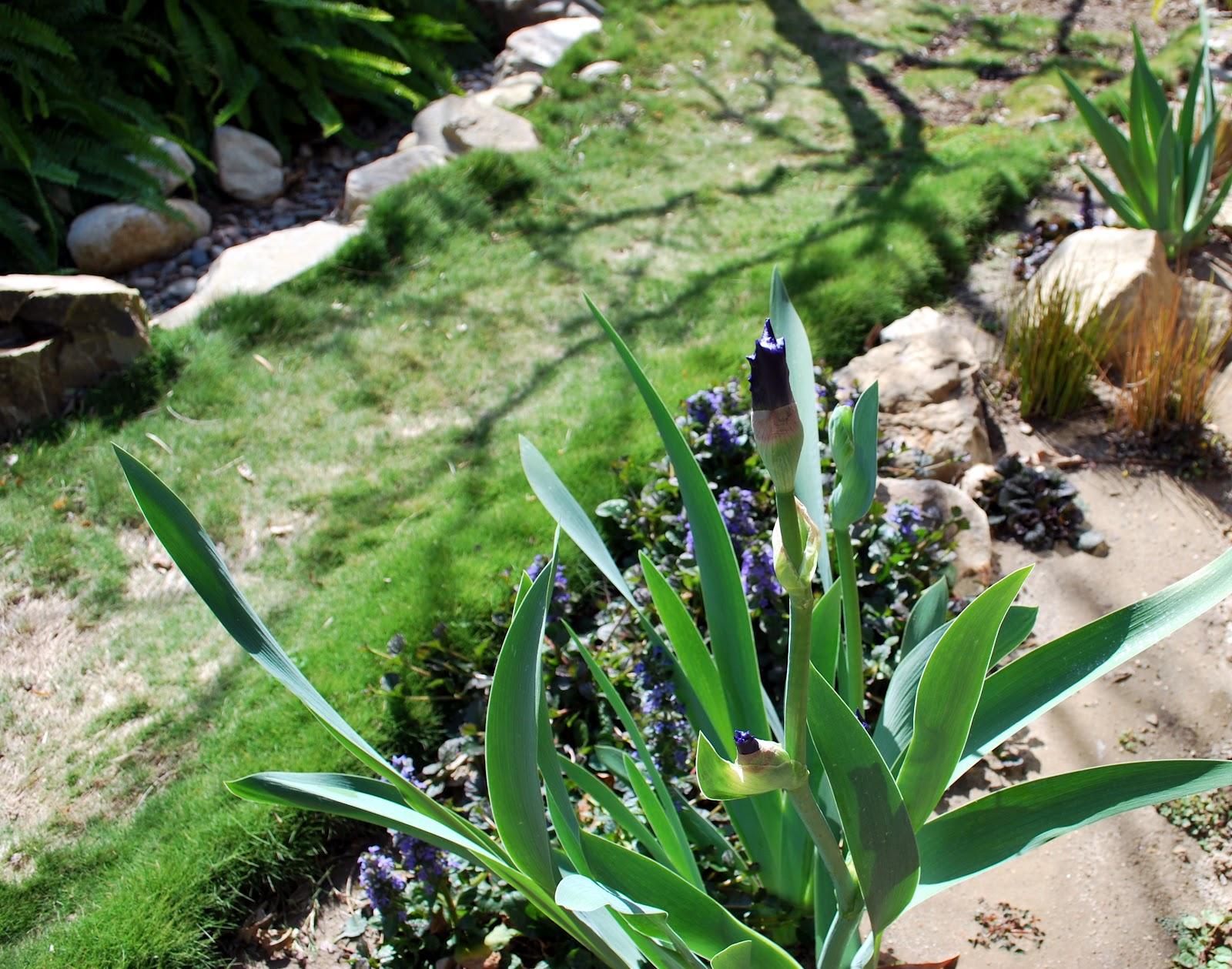 World Of Irises March 2012