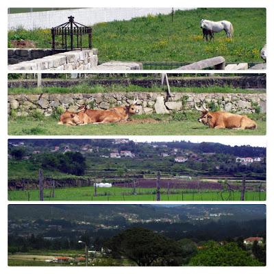 espaços rurais no Caminho de Santiago