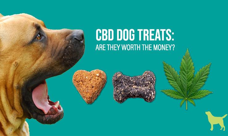 Buy CBD Dog Treats for dogs-Organic CBD #infographic