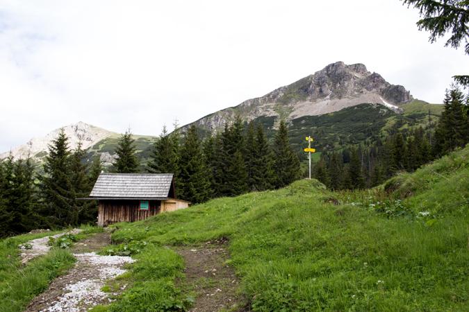 Teicheneggalm | Wildfeld | Eisenerzer Alpen Höhenweg