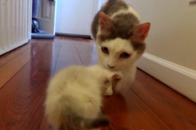 Older Cat Fine With Kitten Food