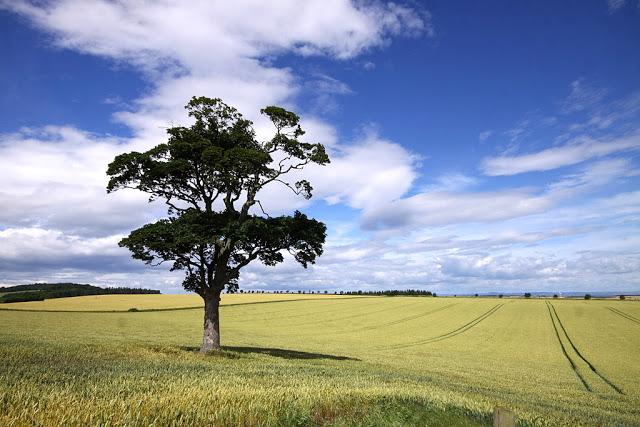 miejsce narodzin szkockiej flagi