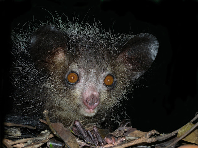 10 Unusual Animals to See Before You Die
