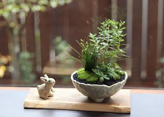 山野草盆栽教室作品例 ノギク イトラッキョウ ユキシロキンバイ