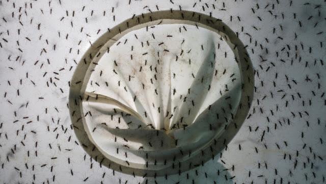 China reporta un caso de dengue y uno de peste bubónica el mismo día