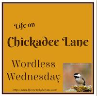 https://www.lifeonchickadeelane.com/2019/11/wordless-wednesday-november-20-with.html