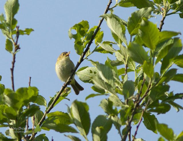 Singing, Spring, Song