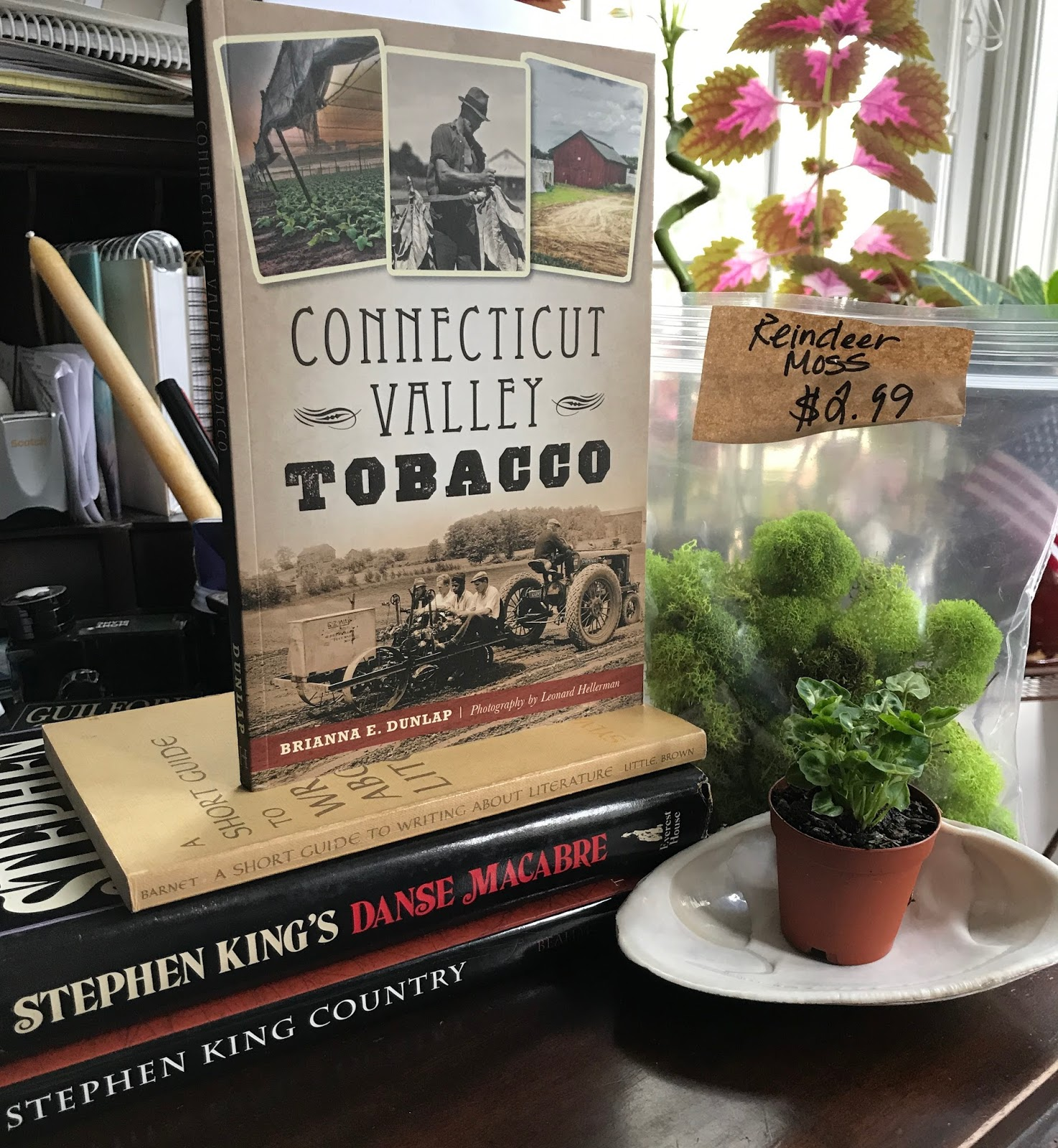 Book And Plant Haul From The Book Club Bookstore, South Windsor, Ct  (wildmoobooks