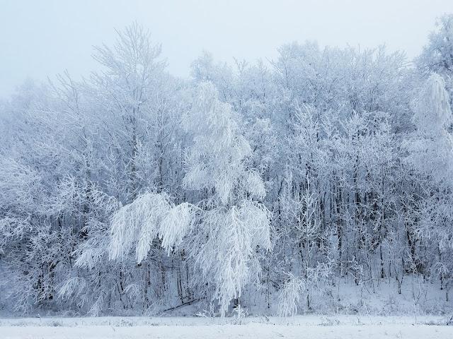 в декабре, в декабре все деревья в серебре...