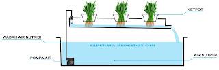 sistem nft hidroponik