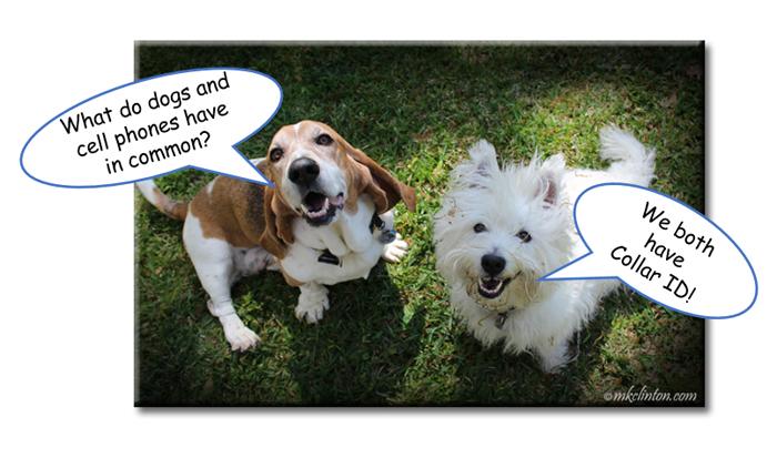 National Joke Day cell phone/dog joke
