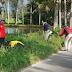 160 Bibit Pohon Mahoni Kembali di Tanamkan Disepanjang Jalan Maninjau