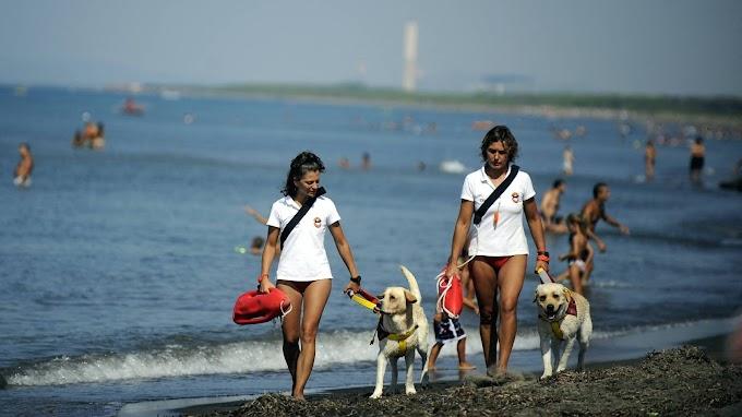 Kutyák mentettek ki 14 embert Olaszországban a tengerből