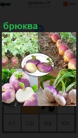 На грядках выращен овощ брюква, собран урожай в тарелку и приготовлен