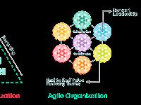 Agile Organization Trends for Company Progress