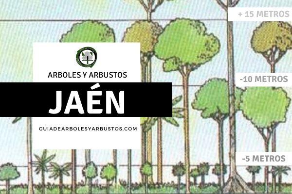 Arboles y arbustos de la provincia de Jaén, España, por estratos.