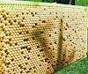 Περισσότερο μέλι και καταπολέμηση της βαρρόα ταυτόχρονα: Μια ανατρεπτική πρόταση!