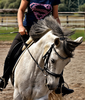 A grey horse 'on the bit' being ridden in an outdoor school