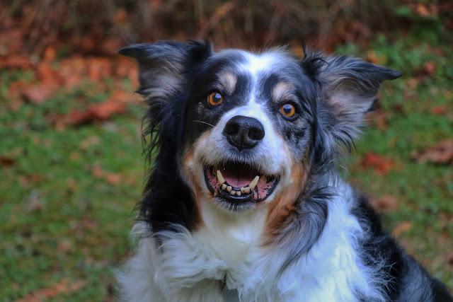 Bodger happy