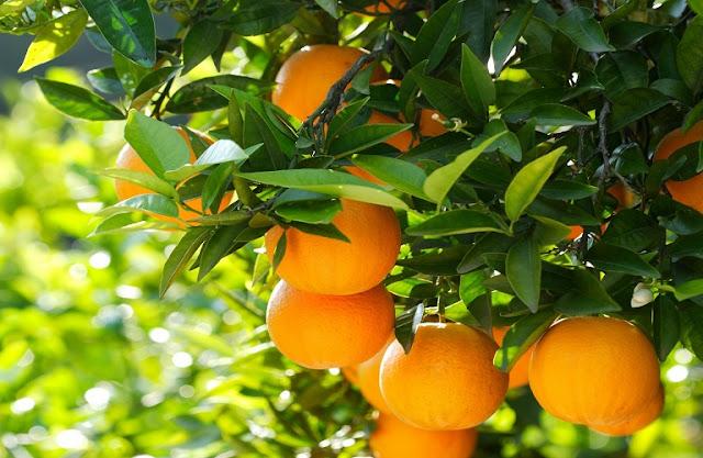 Η λύση για τα πορτοκάλια