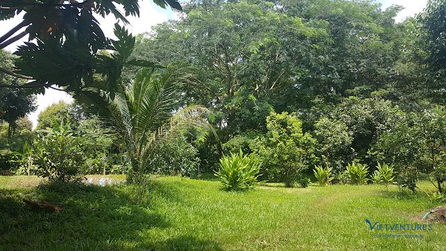 Mảng xanh giữa mùa nắng