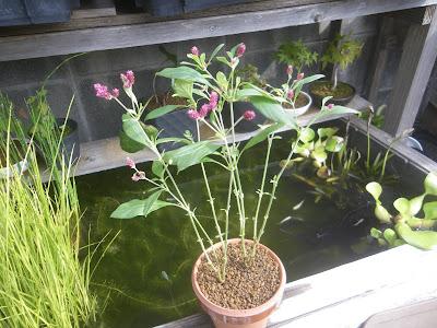 鉢植え バランス