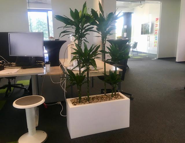 Planten voor kantoor huren of kopen met onderhoudscontract prijzen op aanvraag
